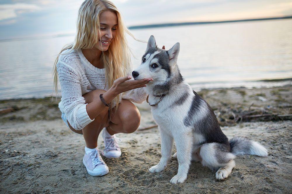 Chica Nombres para perros husky