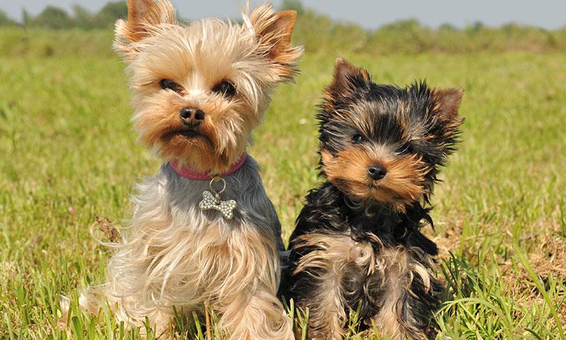 nombre de perros famosos