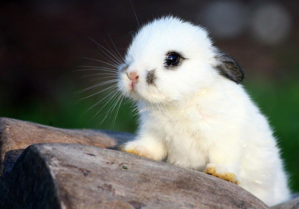 Conejos bebes acerca de ellos