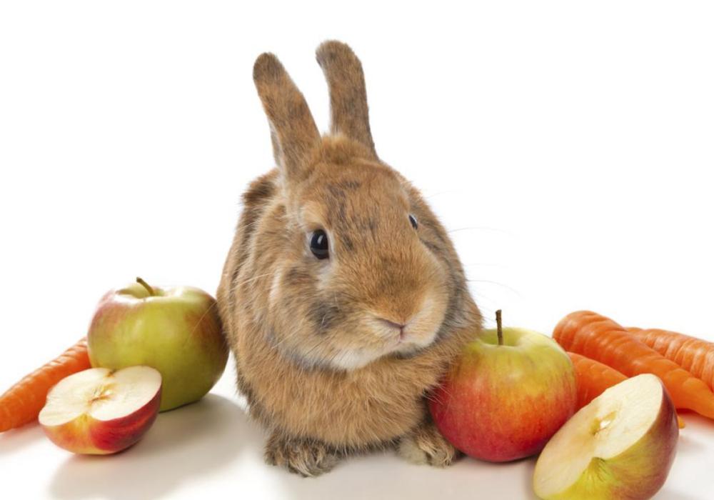 Conejos bebes qué comen