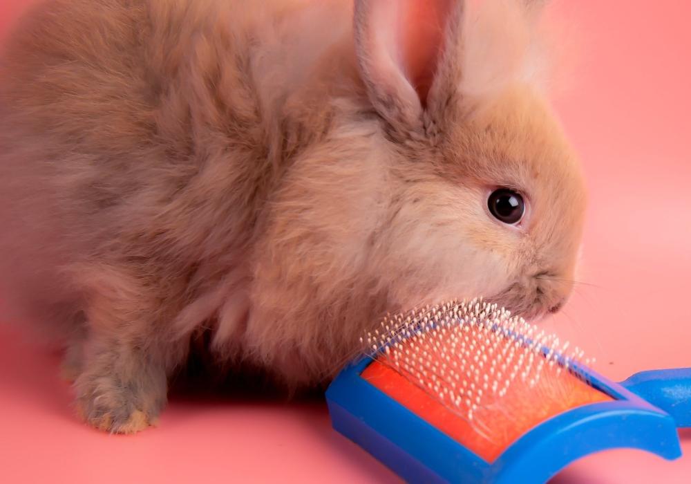 Conejos bebes cepillado