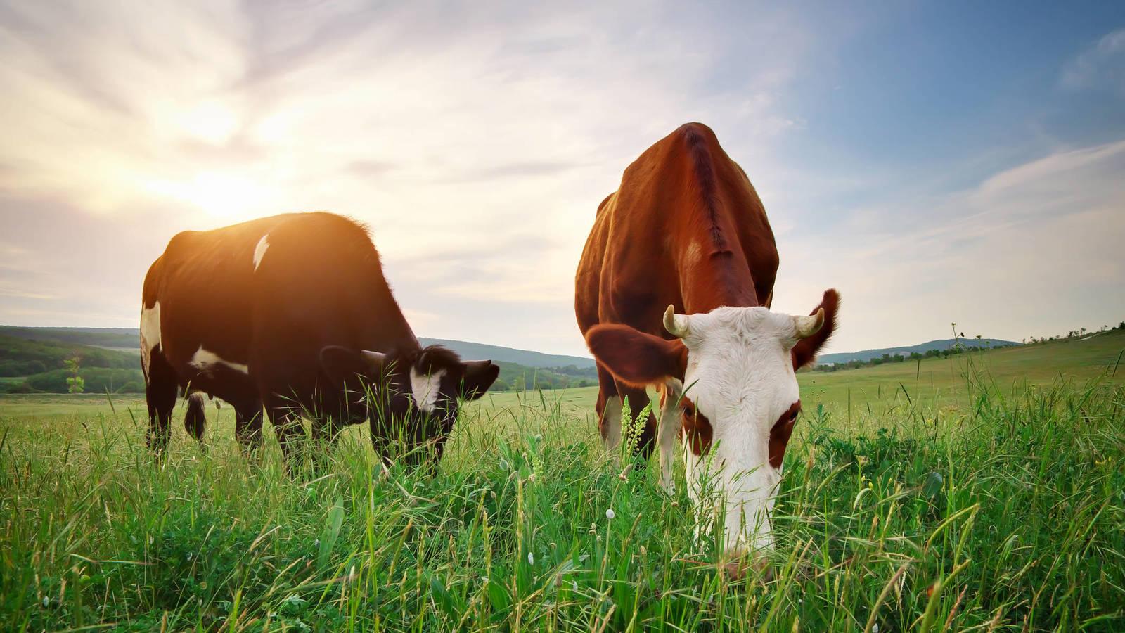 animales herbívoros comiendo