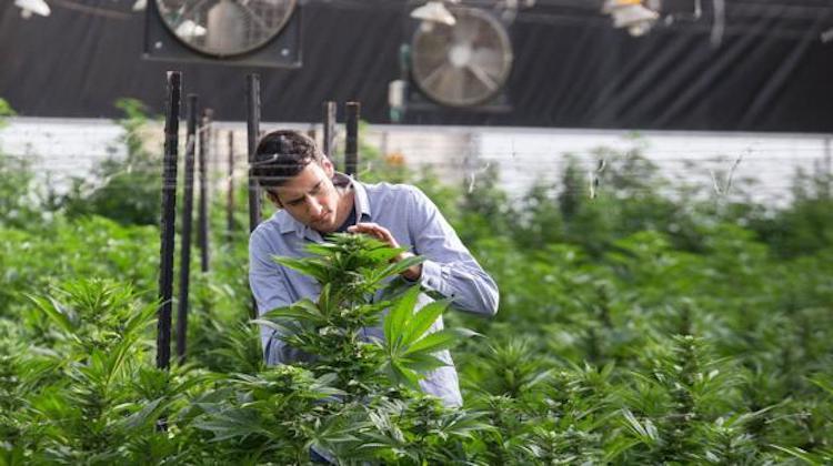 Permisos para cultivar Canamo industrial en Espana