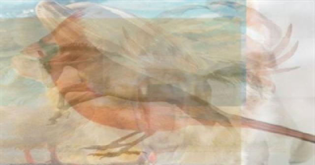 Imagen de El primer animal que distingas, revelará algo extraño sobre tu personalidad. 2