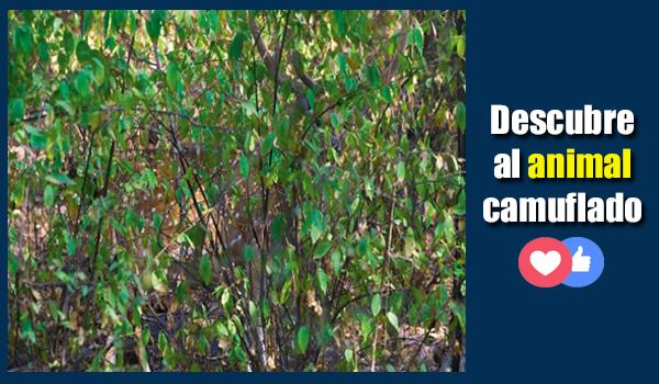 Imagen de Animal camuflado: Descubre el animal oculto entre las plantas 4