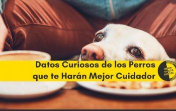 Datos Curiosos de los Perros que te Harán Mejor Cuidador