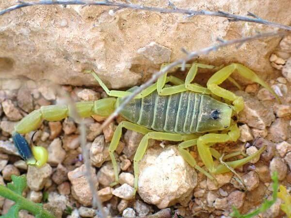 Imagen de Los animales más peligrosos y venenosos del mundo 16