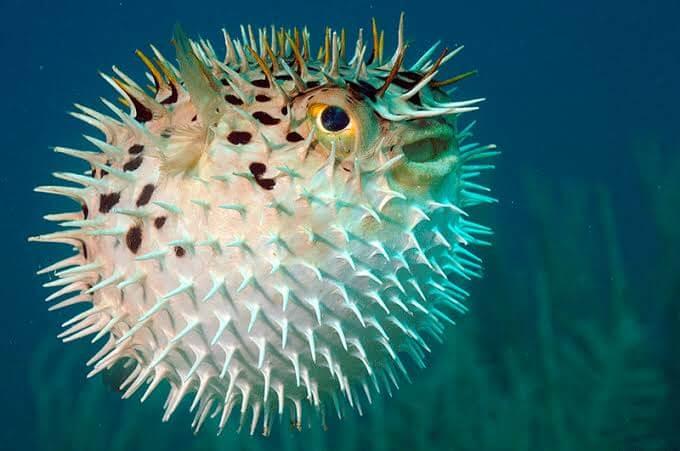 Imagen de Los animales más peligrosos y venenosos del mundo 15