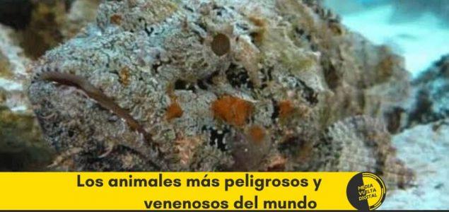 Los animales más peligrosos y venenosos del mundo