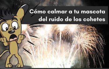 Imagen de Consejos para calmar a tu perro de los Petardos o Cohetes (explosivos) 21