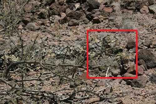 Imagen de Prueba tu visión: Descubre al Francotirador camuflado 14