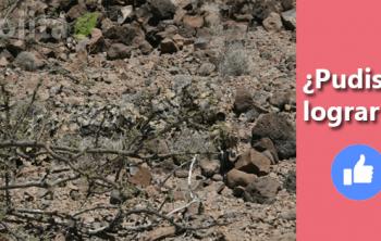 Imagen de Prueba tu visión: Descubre al Francotirador camuflado 17