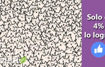 Imagen de Reto visual: Encuentra al perro entre los gatos 34