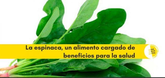 Imagen de La espinaca, un alimento cargado de beneficios para la salud 8