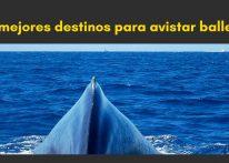 mejores destinos para avistar ballenas