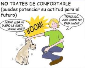Imagen de Consejos para calmar a tu perro de los Petardos o Cohetes (explosivos) 12