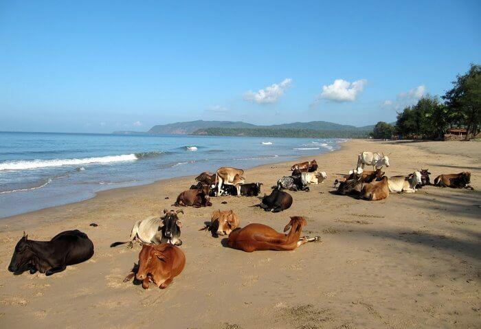 Imagen de Las 10 playas más bonitas de la India 7