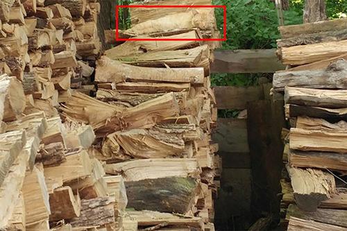 Imagen de Ejercicio visual: Logra encontrar al gato dormido entre los troncos 13