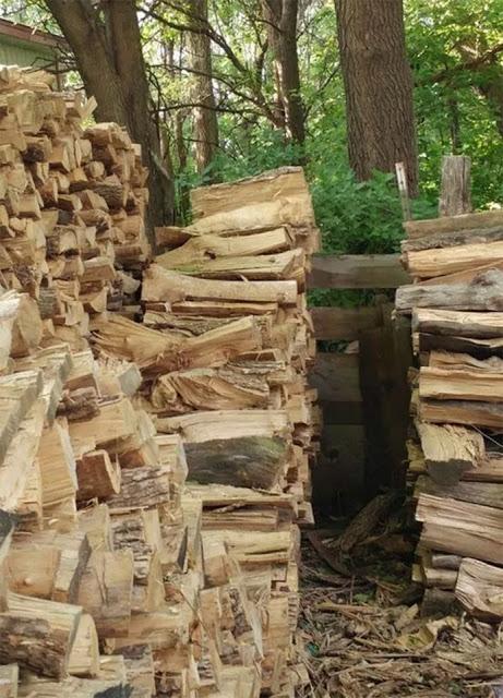 Imagen de Ejercicio visual: Logra encontrar al gato dormido entre los troncos 12